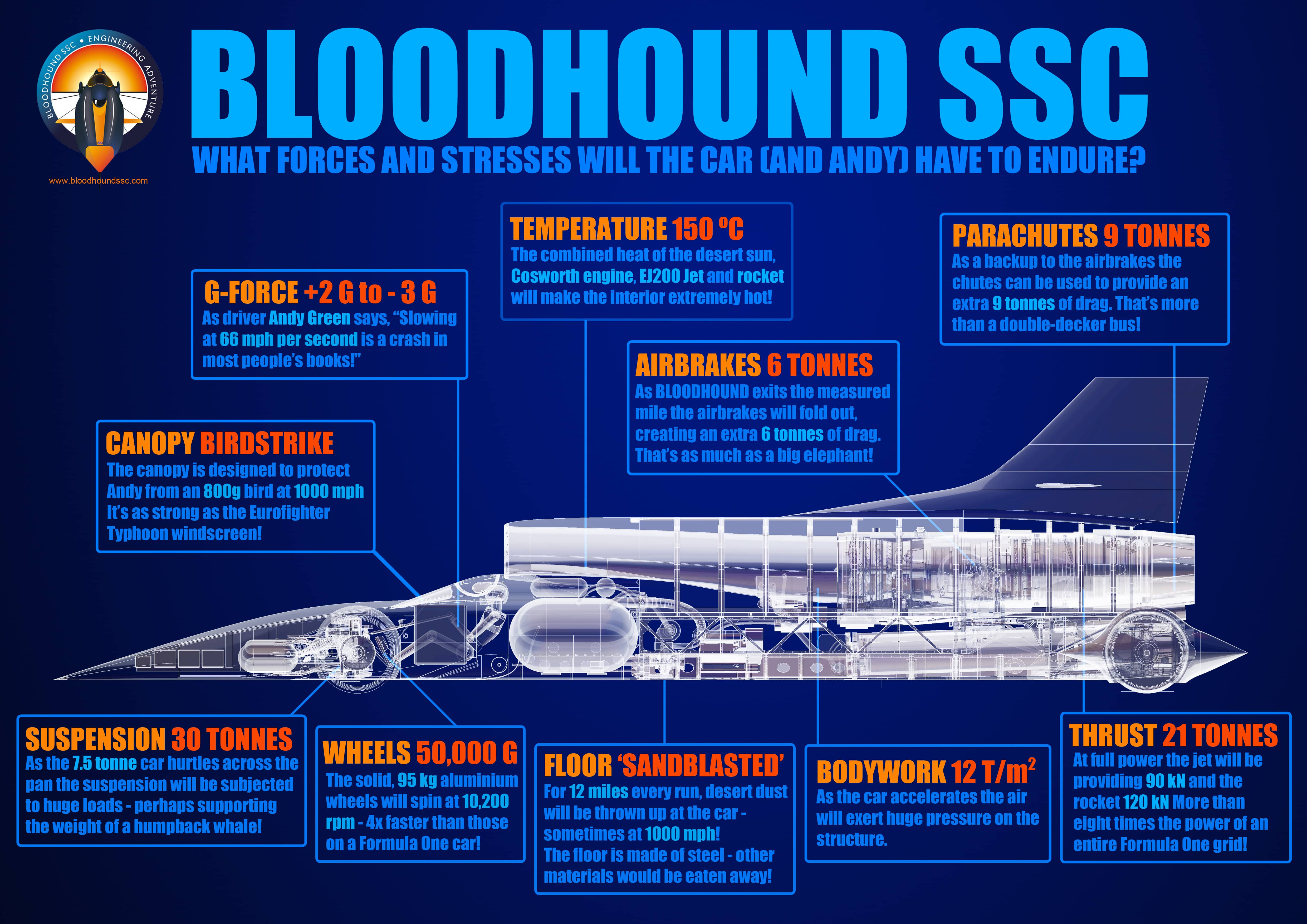 bloodhound infographic 03